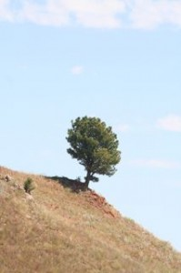 Alone on the edge_3015