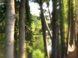 Blurred Vision_4929