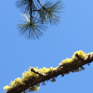 Moss and pine_0333